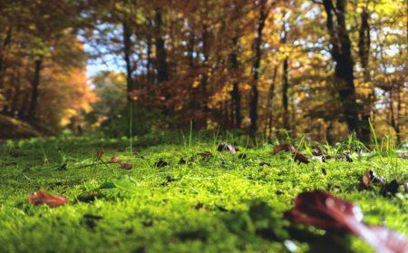 PURE & POSITIVE Artikel Foto Waldboden 10/2018